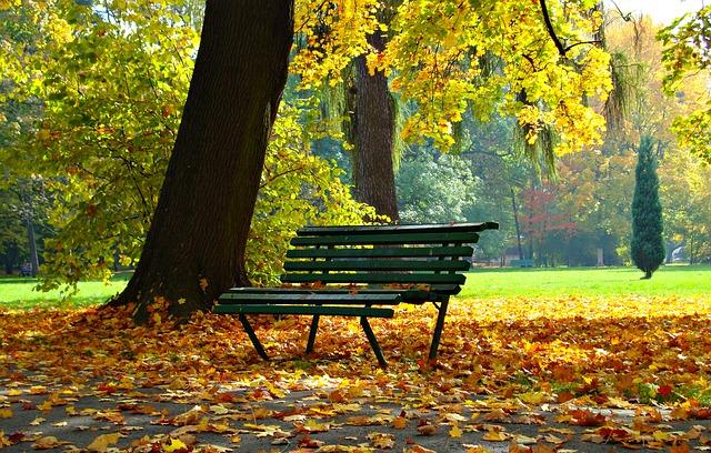 autumn_1877749_640_0.jpg