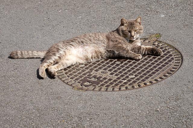 cat_2400501_640_0.jpg