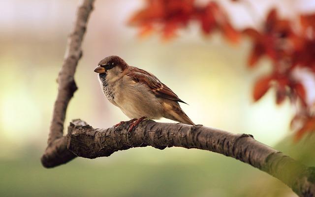 sparrow_9950_640_0.jpg